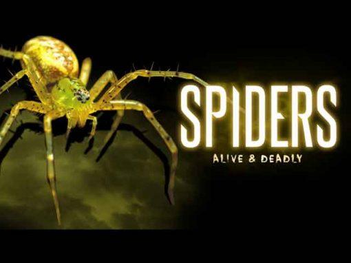 Spiders – Alive & Deadly Exhibition
