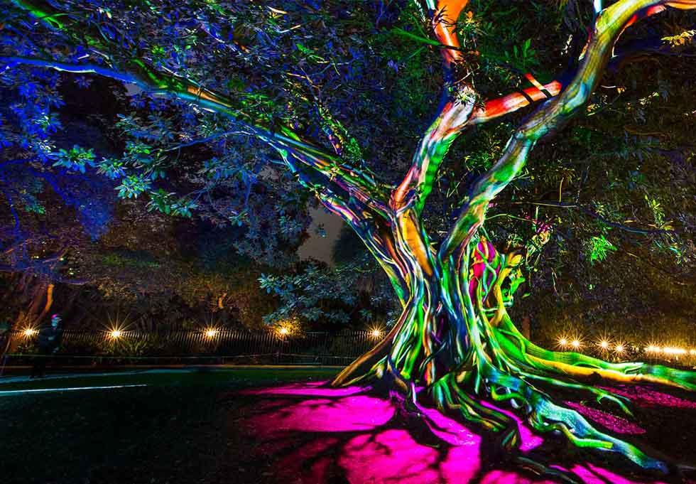Electric Forest Vivid Sydney