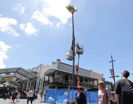 mike-hewson-studios-palm-tree-