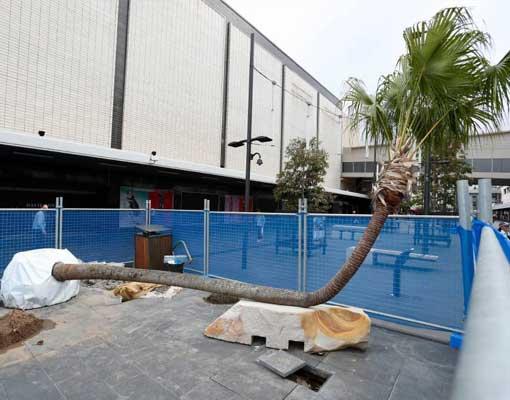 mike-hewson-studios-palm-tree-seats